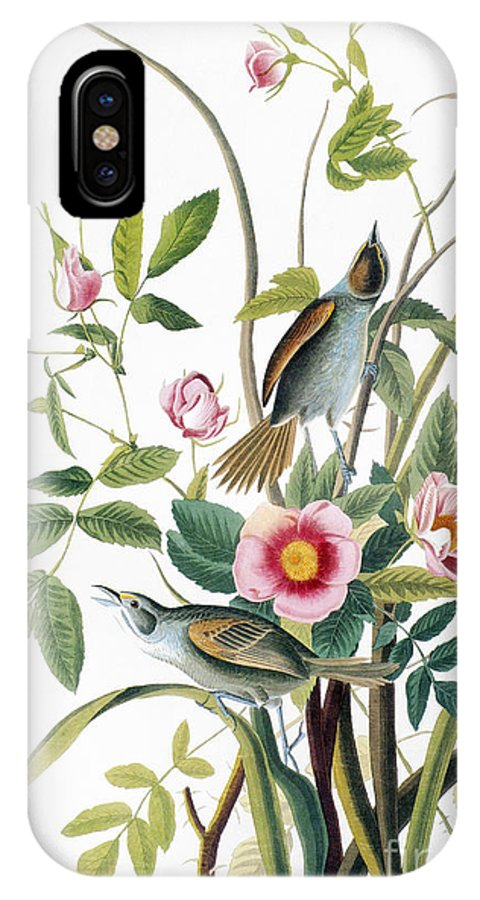 1858 IPhone X Case featuring the photograph Seaside Sparrow, 1858 by Granger