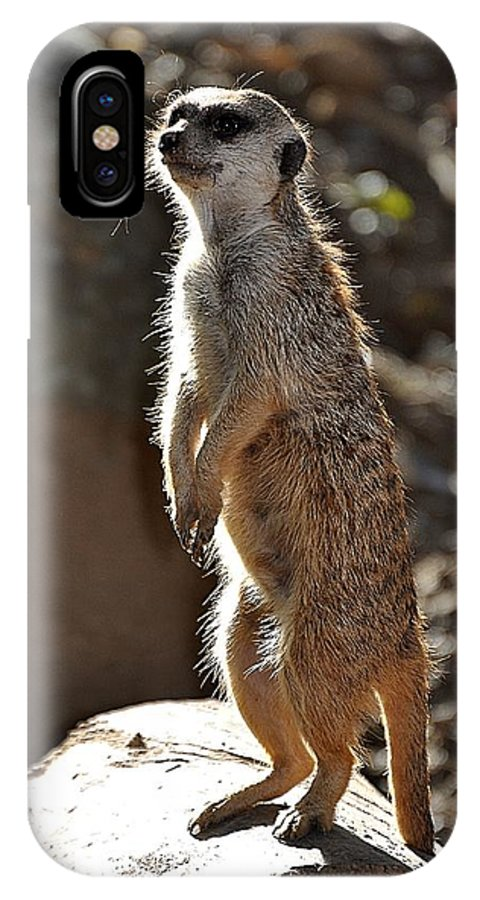 Animals IPhone X Case featuring the photograph Sentry by Jan Amiss Photography