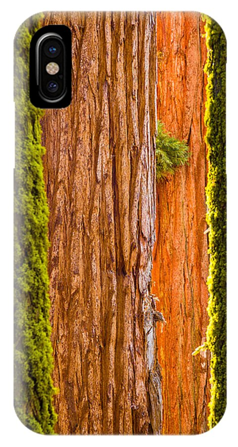 Plants IPhone X Case featuring the photograph Sequoia Abstract by Rikk Flohr