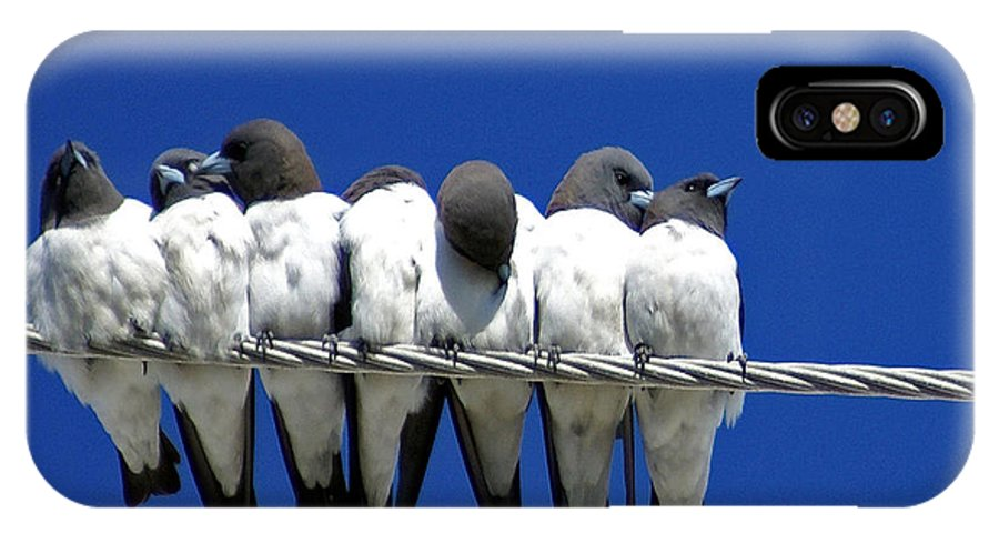 Animals IPhone X Case featuring the photograph Seven Swallows Sitting by Holly Kempe