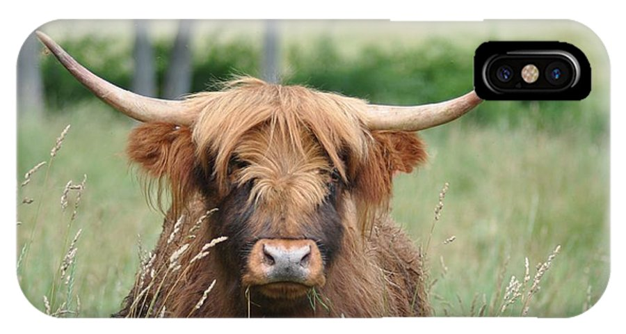 Cow IPhone X Case featuring the photograph Shaggy by Bill Cannon