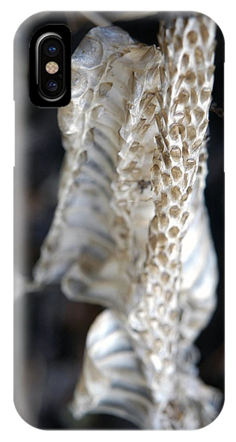 Snake IPhone X Case featuring the photograph Shed - Snake Skin by D'Arcy Evans