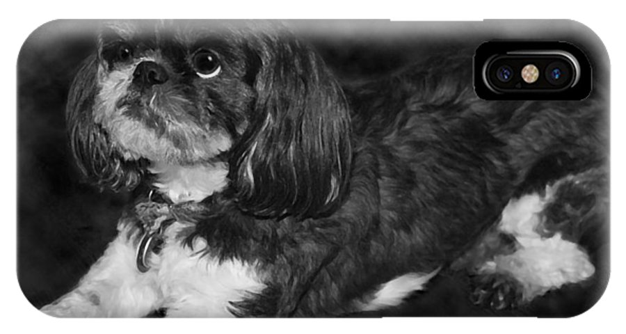 3scape IPhone X Case featuring the painting Shih Tzu by Adam Romanowicz