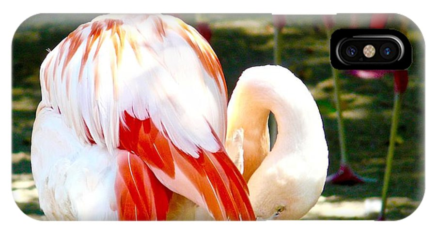 Flamingoes IPhone X / XS Case featuring the photograph Showgirls by Jacqueline Howe