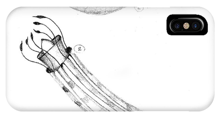 Ocean IPhone Case featuring the drawing Shrimp by Fanny Diaz