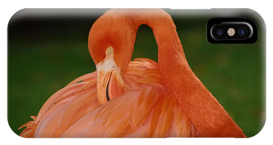 Flamingo IPhone X Case featuring the photograph shy by Gaby Swanson