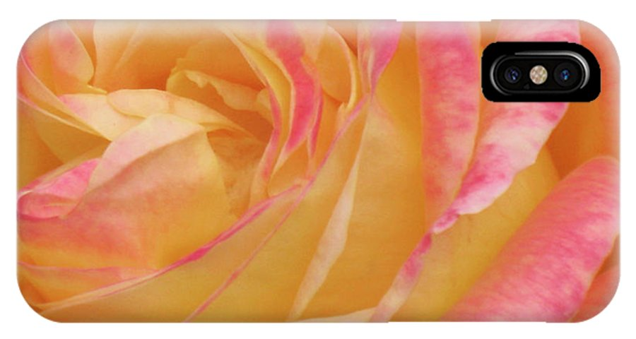 Close-up Photo Photography Flower Plant Yellow Rose Pink IPhone X Case featuring the photograph Shy Yellow Rose by Christina Geiger