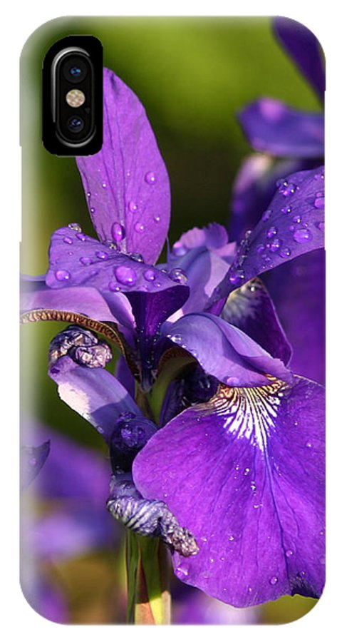 Flower IPhone X Case featuring the photograph Siberian Iris After Rain by Robert E Alter Reflections of Infinity