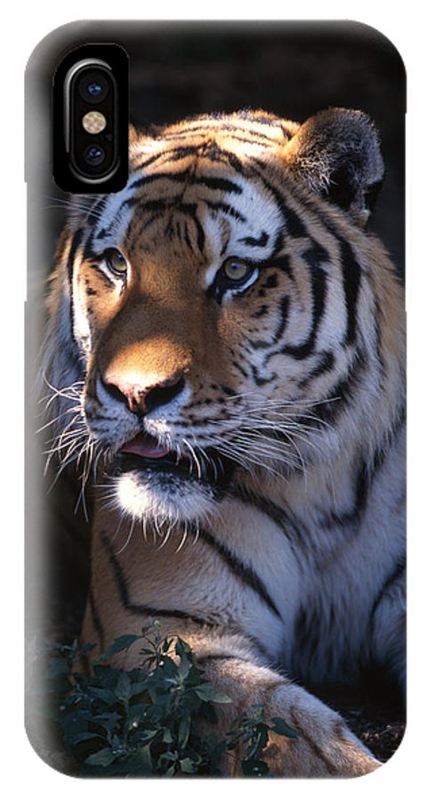 Tiger IPhone X Case featuring the photograph Siberian Tiger Executive Portrait by John Harmon