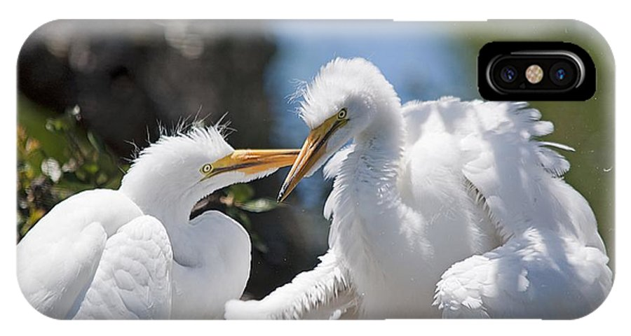 Wildlife IPhone X Case featuring the photograph Siblings by Kenneth Albin