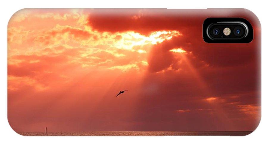 Siesta Key IPhone X Case featuring the photograph Siesta Key Pelican by DJ Florek