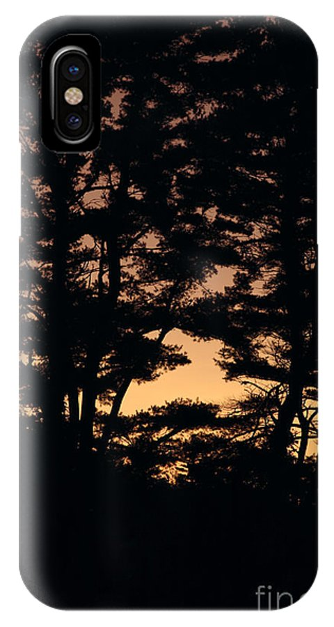Tree IPhone X Case featuring the photograph Silhouette Of Forest by Erin Paul Donovan