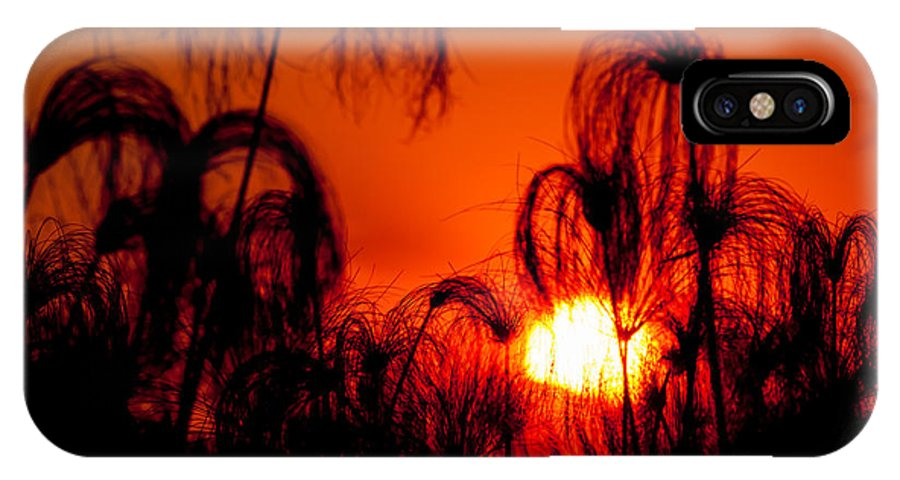 Botswana IPhone X / XS Case featuring the photograph Silhouette Of Papyrus At Sunset by Jacques Jacobsz