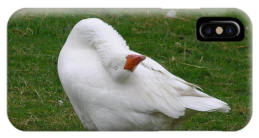 Goose IPhone Case featuring the photograph Silly Goose by Louise Magno