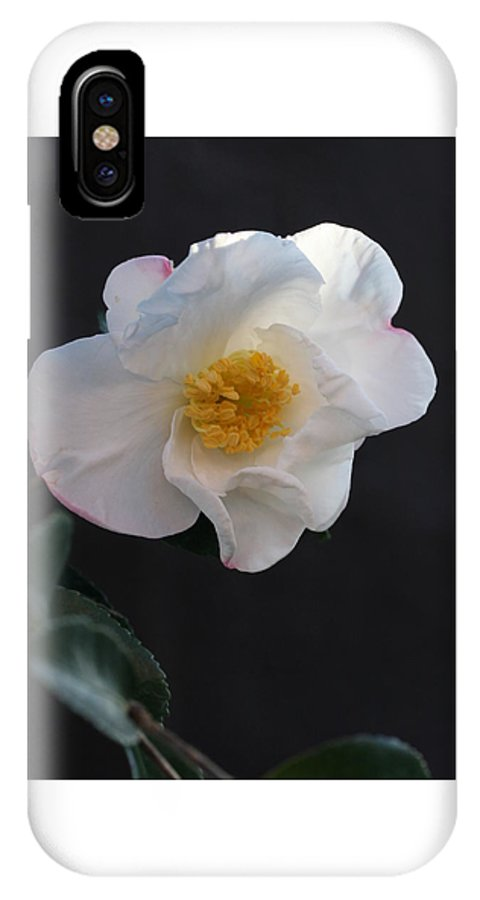Camellia IPhone X Case featuring the photograph Silver Waves Camellia by Tammy Pool