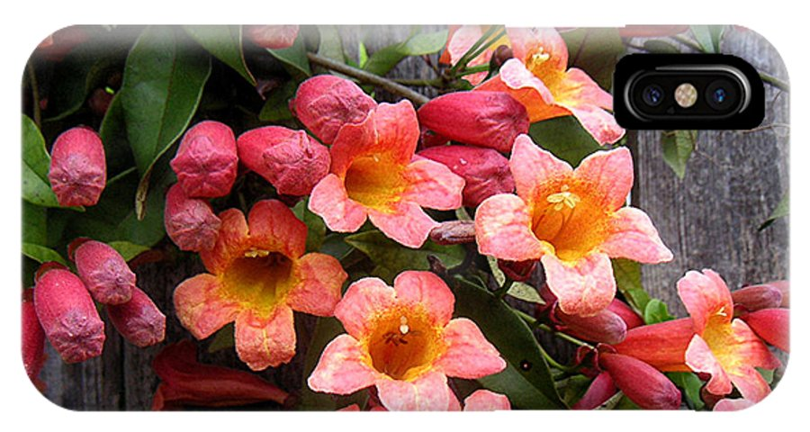 Nature IPhone Case featuring the photograph Singing Corals by Lucyna A M Green