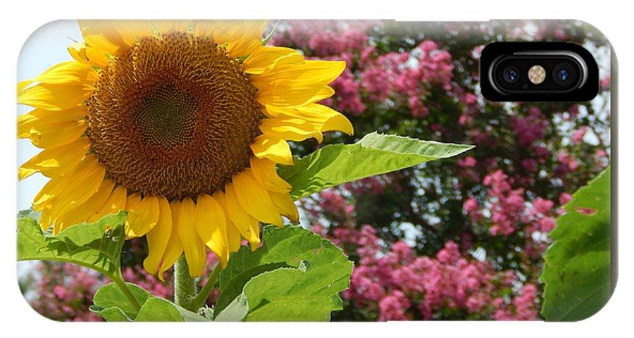 Sunflower IPhone X Case featuring the photograph Singing Oh Happy Day by Tanya Marley