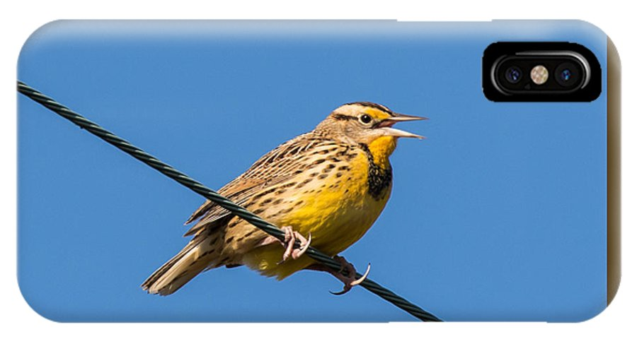 Eastern Meadowlark IPhone X Case featuring the photograph Singing On The Wire by Jurgen Lorenzen