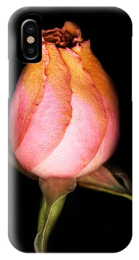 Rose IPhone X Case featuring the photograph single Rose by Marilyn Hunt