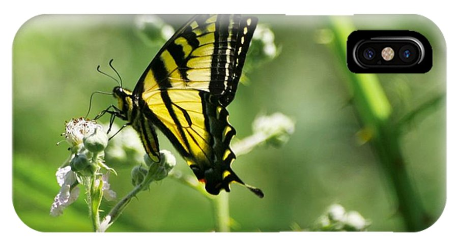 Butterfly IPhone X / XS Case featuring the photograph Sipping On Blackberry Blossoms by Teresa A Lang