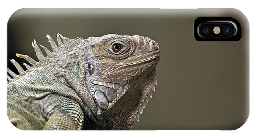 Iguana IPhone X Case featuring the photograph Sitting Pretty by Jacqueline Milner