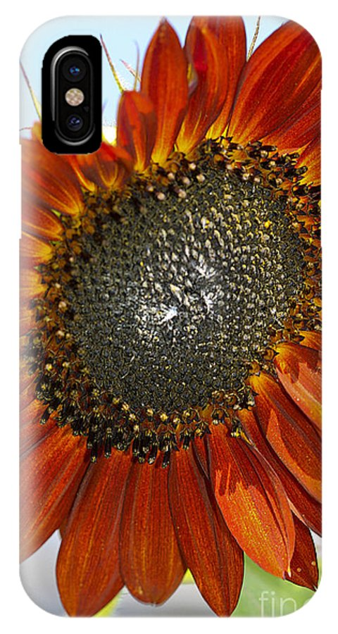 Sun Flower IPhone X Case featuring the photograph Sizzling Hot Sun Flower by Deborah Benoit