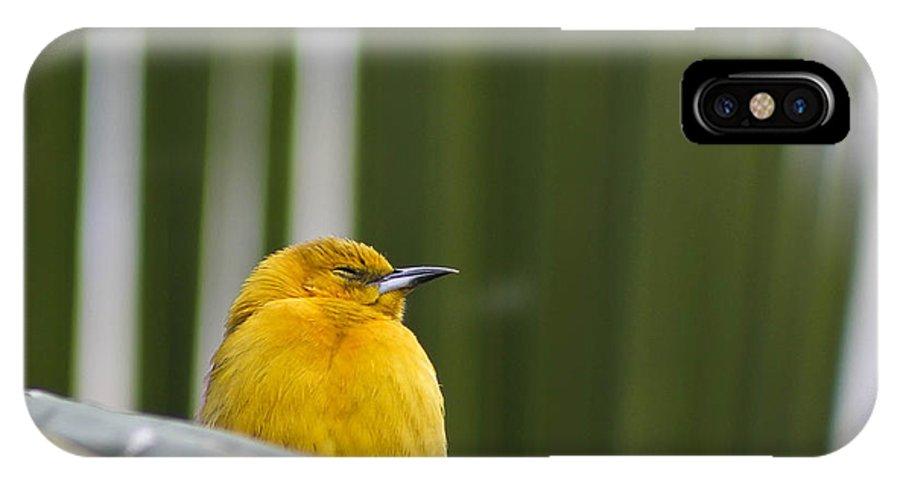 Bird IPhone X Case featuring the photograph Sleep Little One by Teresa Zieba