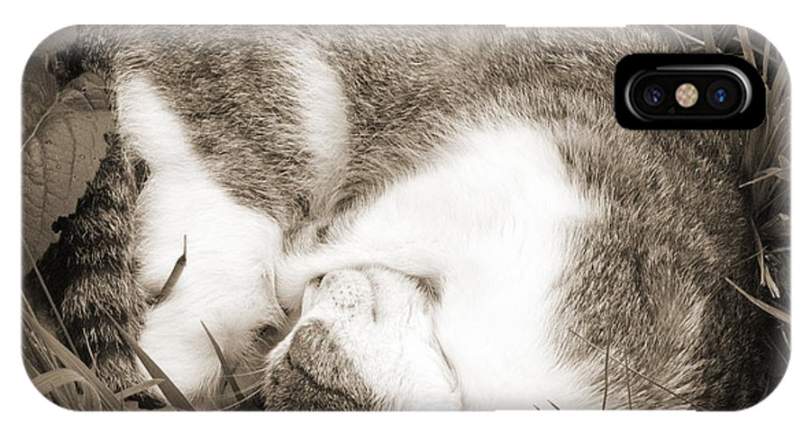 Pets IPhone Case featuring the photograph Sleeping by Daniel Csoka
