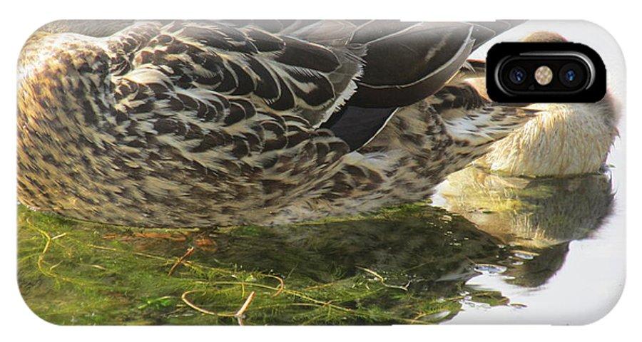 Mallard Ducks. IPhone X Case featuring the photograph Sleeping Ducks. by Mike Homblette