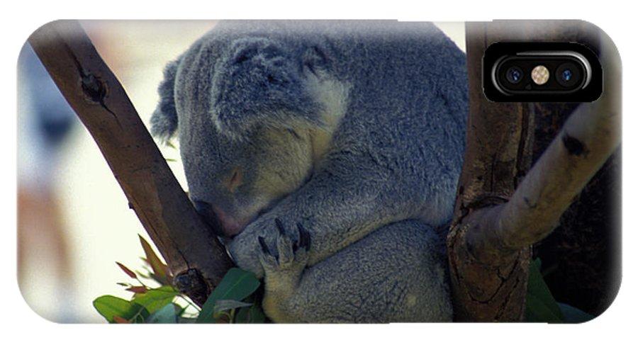 Sleep IPhone X Case featuring the photograph Sleepy Koala Bear by Carl Purcell