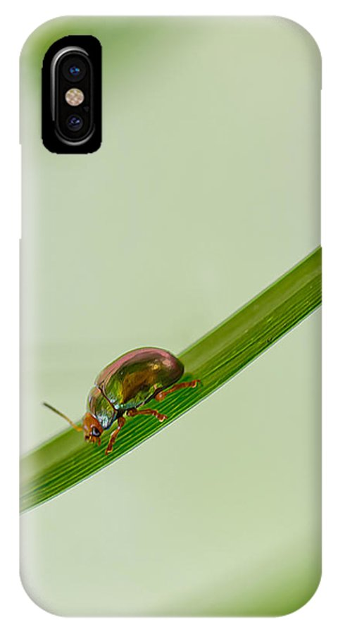 Leaf IPhone X Case featuring the photograph Slippery Dip by Az Jackson