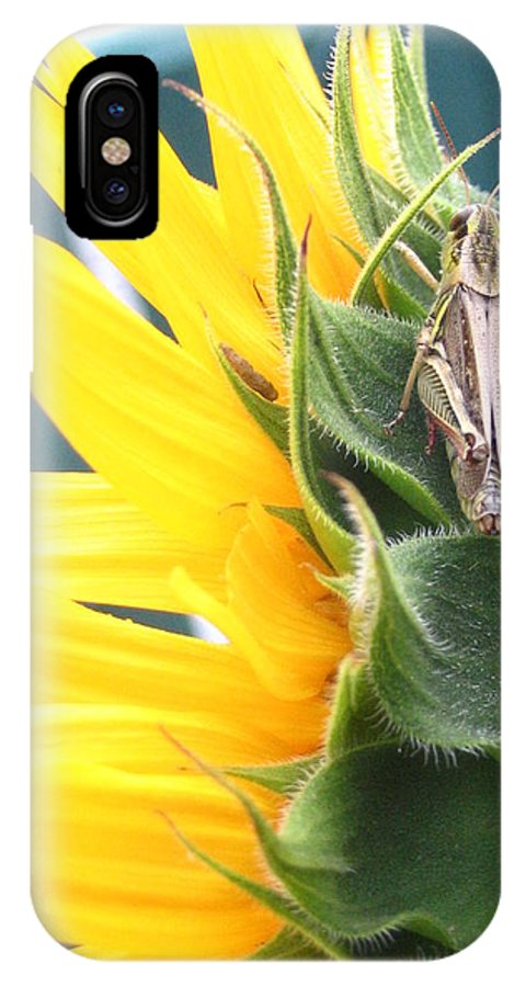 Sunflower IPhone X Case featuring the photograph Small Break by Line Gagne