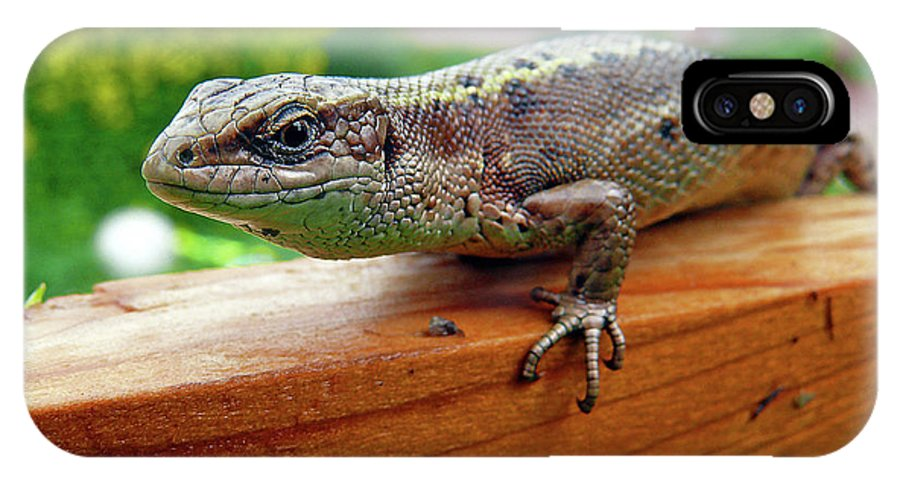 Animal IPhone X / XS Case featuring the photograph Small Lizard by Alex Galkin