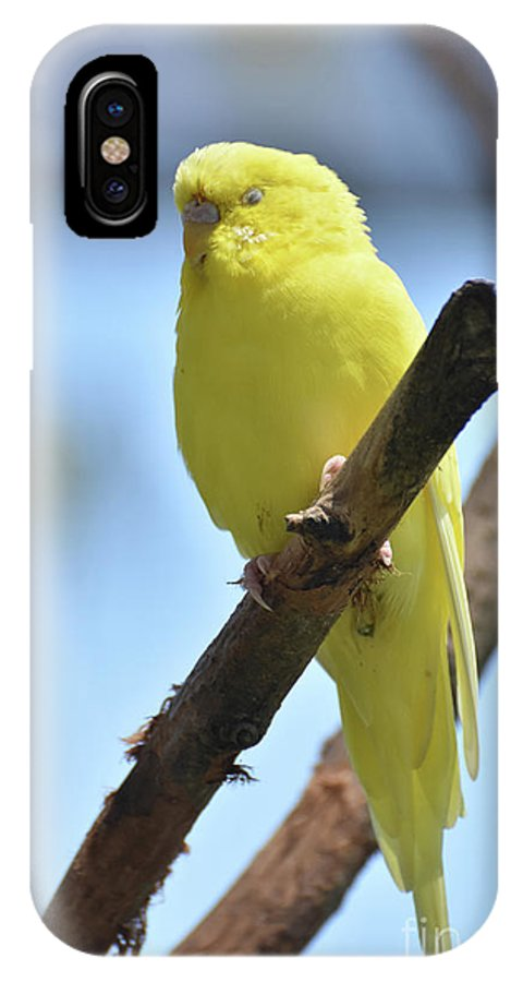 Budgie IPhone X Case featuring the photograph Small Yellow Budgie Parakeet In The Wild by DejaVu Designs