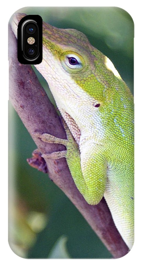 Animal IPhone Case featuring the photograph Smile by Shelley Jones