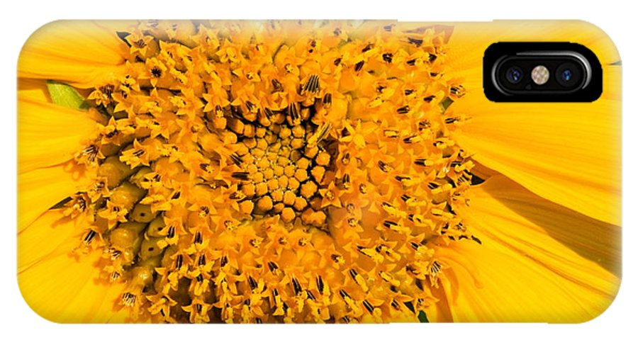 Flower IPhone X Case featuring the photograph Smiling Sunflower by Amanda Kiplinger