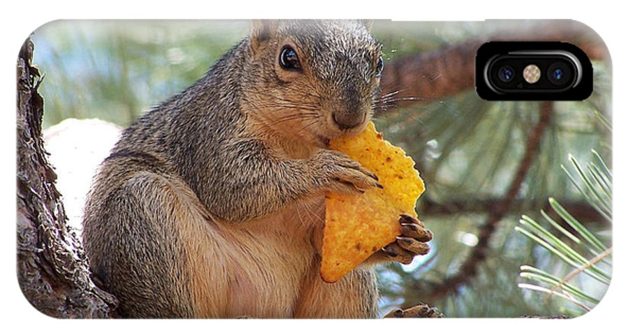 Animal IPhone X Case featuring the photograph Snack Time by Ernie Echols