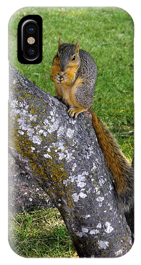 Nature IPhone X Case featuring the photograph Snack Time by Lucyna A M Green