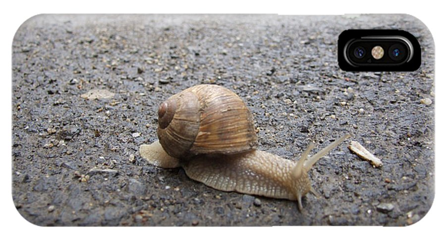 Snail IPhone X Case featuring the photograph Snail 2 by Adrian Bud