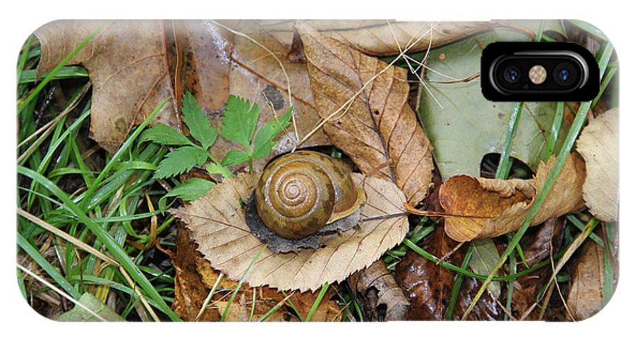 Snail IPhone X Case featuring the photograph Snail At Home by Allen Nice-Webb