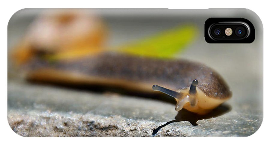 Snail IPhone X Case featuring the photograph Snail Searching For Shell by Bibi Rojas