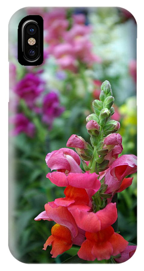 Snapdragons IPhone X Case featuring the photograph Snap by Linda Mishler