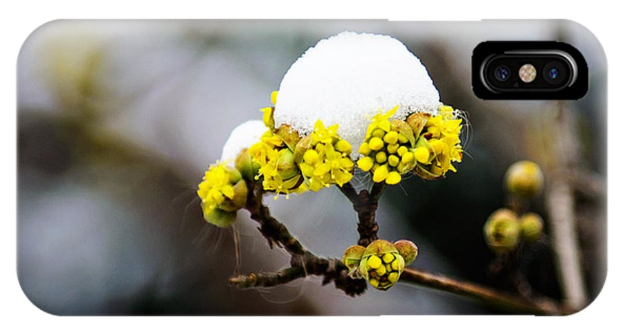 Central Park IPhone X Case featuring the photograph Snow Capped Flower by Anna Serebryanik