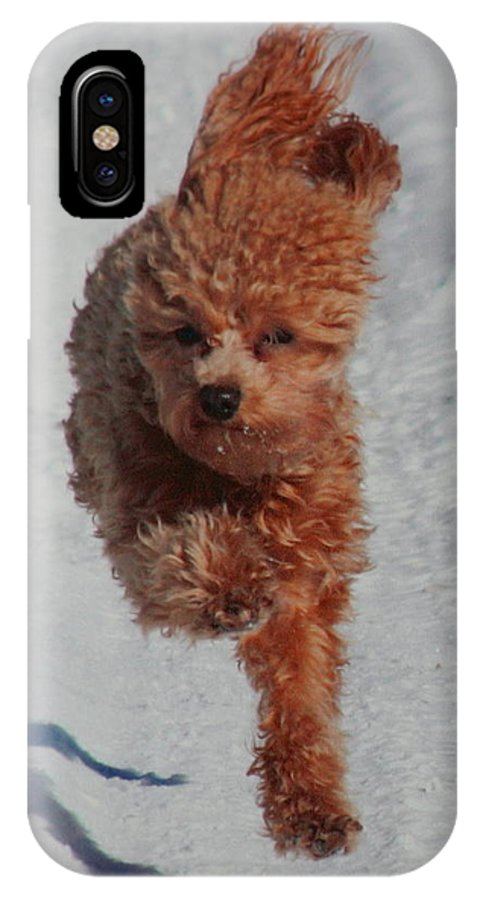 Dog IPhone X Case featuring the photograph Snow Dog by Diane Merkle