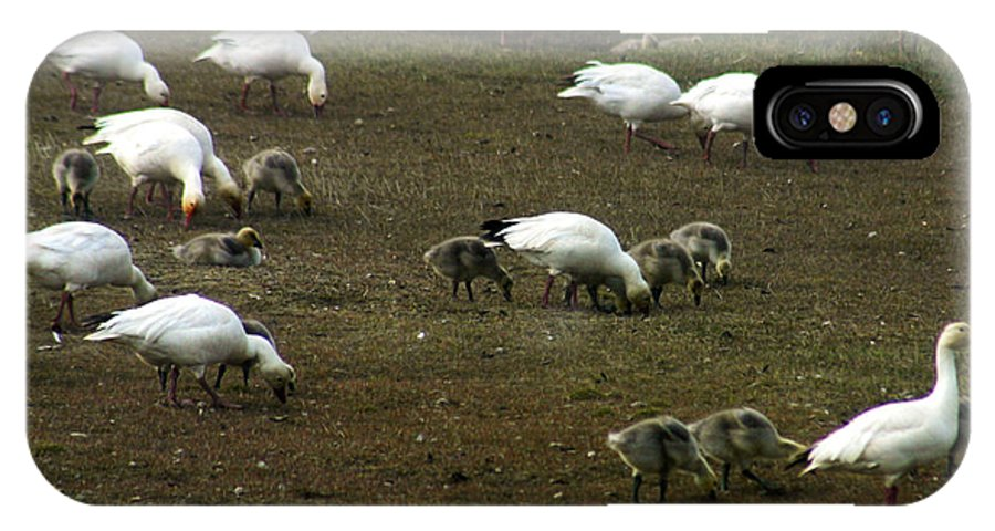 Snow Geese IPhone X Case featuring the photograph Snow Geese by Anthony Jones