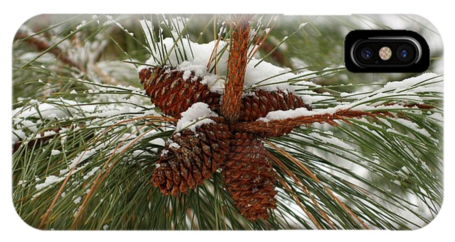 Pine IPhone Case featuring the photograph Snow In The Pine by Idaho Scenic Images Linda Lantzy