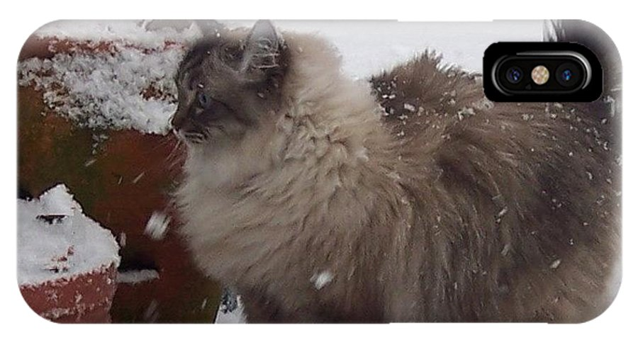 Cats IPhone X Case featuring the photograph Snow Kitty by Debbi Granruth