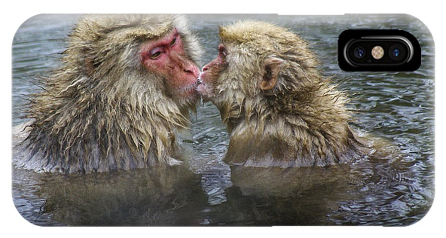 Snow Monkey IPhone X Case featuring the photograph Snow Monkey Kisses by Michele Burgess
