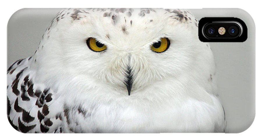 Snow Owl IPhone X Case featuring the photograph Snow Owl by Pierre Leclerc Photography