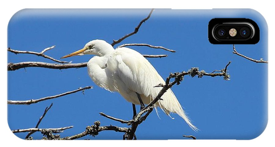 Egret IPhone X Case featuring the photograph Snowy Egret In Nesting Area by Gary Canant